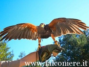 falconiere_web--400x300